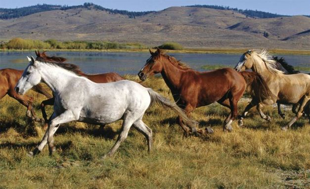 wild-horses-mural